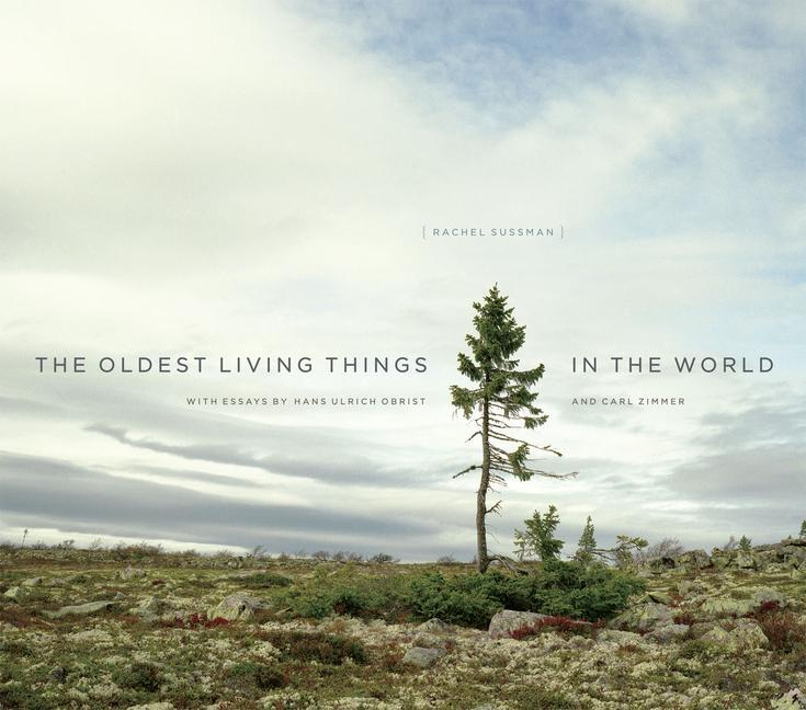 Oldest Living Things in the World als Buch von Rachel Sussman