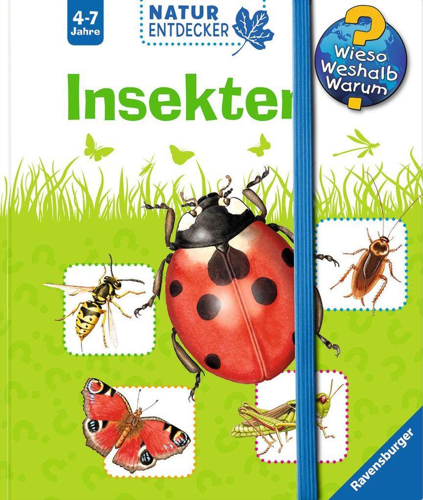 Insekten als Buch von Susanne Gernhäuser