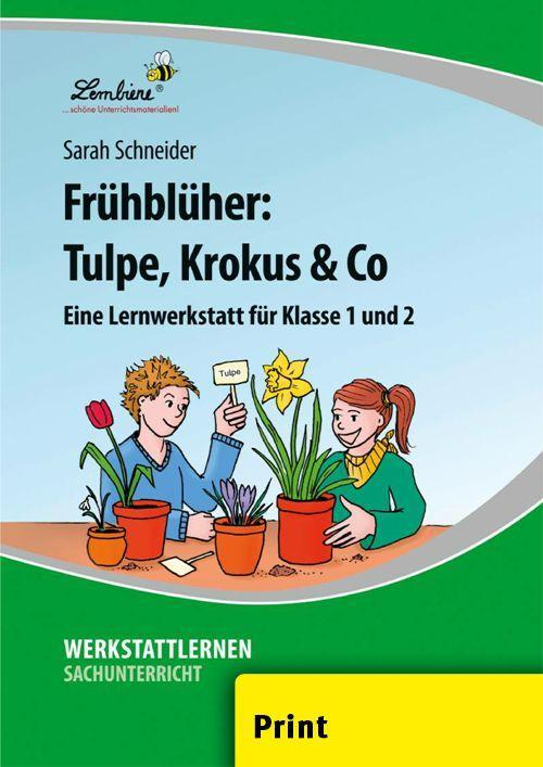 Frühblüher: Tulpe, Krokus & Co (PR) als Buch von Sarah Schneider