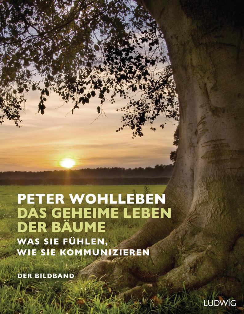 Das geheime Leben der Bäume als Buch von Peter Wohlleben