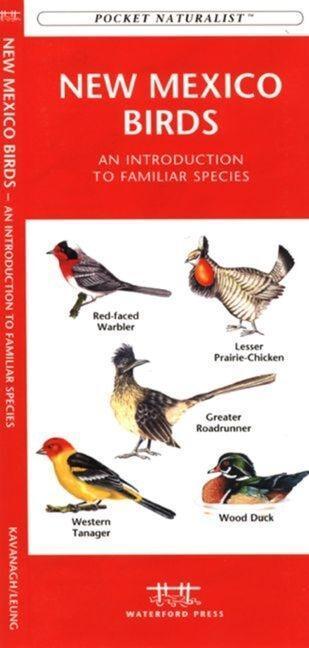 Arizona Trees & Wildflowers: An Introduction to Familiar Species als Taschenbuch