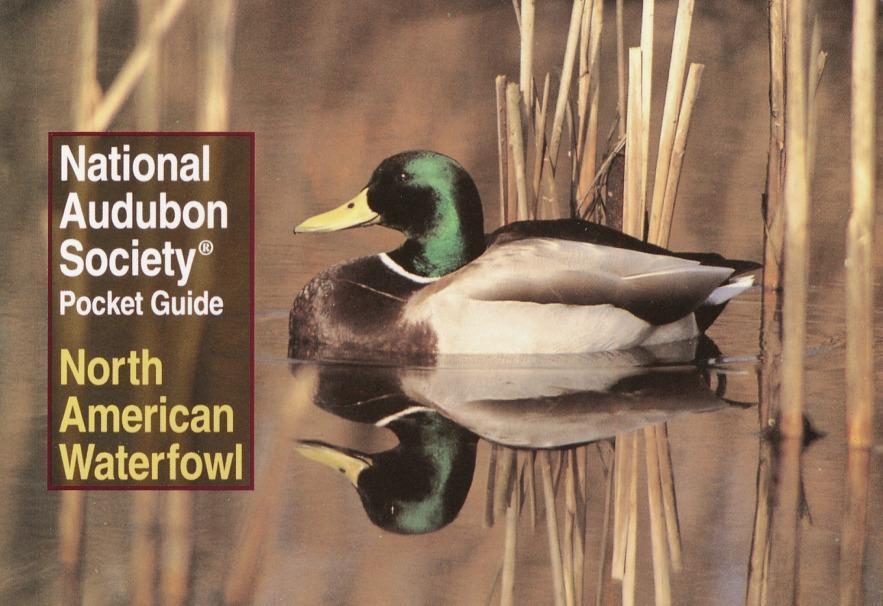 National Audubon Society Pocket Guide to Waterfowl als Taschenbuch