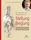 Die Anatomie und Biomechanik von Stellung und Biegung