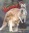 What Is a Marsupial?