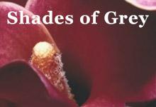 Shades of Grey - die Erotik Serie von E L James