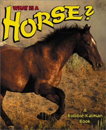 What Is a Horse? als Buch
