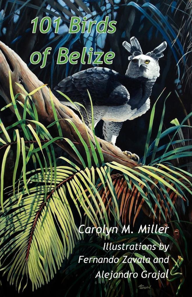 101 Birds of Belize als Buch von Carolyn M. Miller - Produccicones de la Hamaca