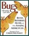 Kcd Bugs