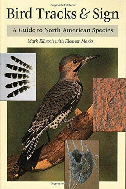 Bird Tracks & Sign: A Guide to North American Species als Taschenbuch