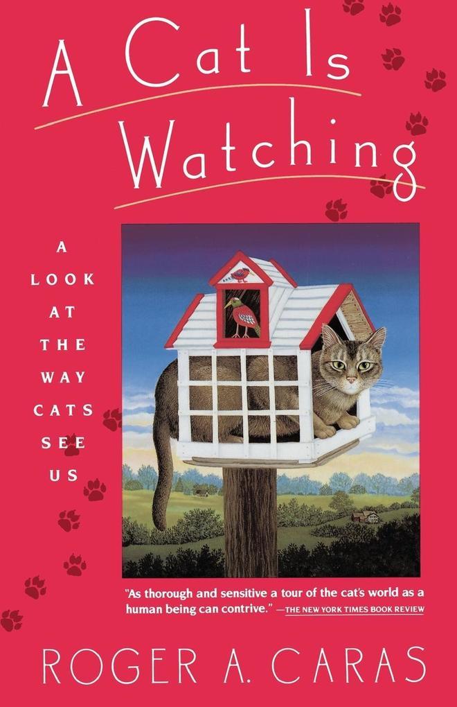 Cat Is Watching als Taschenbuch
