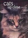 Cats Up Close