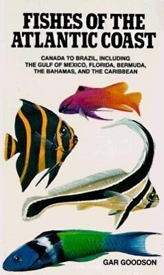 Fishes of the Atlantic Coast: Canada to Brazil, Including the Gulf of Mexico, Florida, Bermuda, the Bahamas, and the Caribbean als Taschenbuch