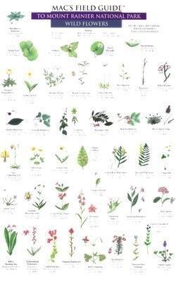 Flowers and Trees als Taschenbuch