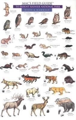 Mammals and Birds als Taschenbuch