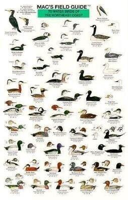 Northeast Coast Water Birds als Taschenbuch