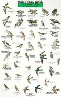 Northeast Park and Backyard Birds als Taschenbuch