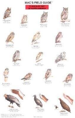 Mac's Field Guide to North American Birds of Prey als Taschenbuch