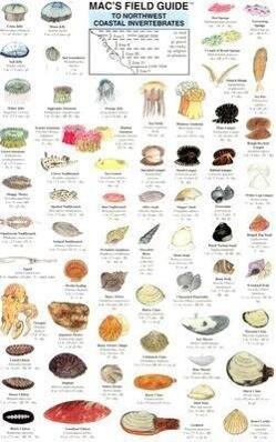 Northwest Coastal Invertebrates als Taschenbuch