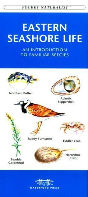 Michigan Birds: A Folding Pocket Guide to Familiar Species als Taschenbuch