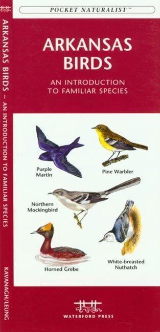 Nebraska Birds: An Introduction to Familiar Species als Taschenbuch