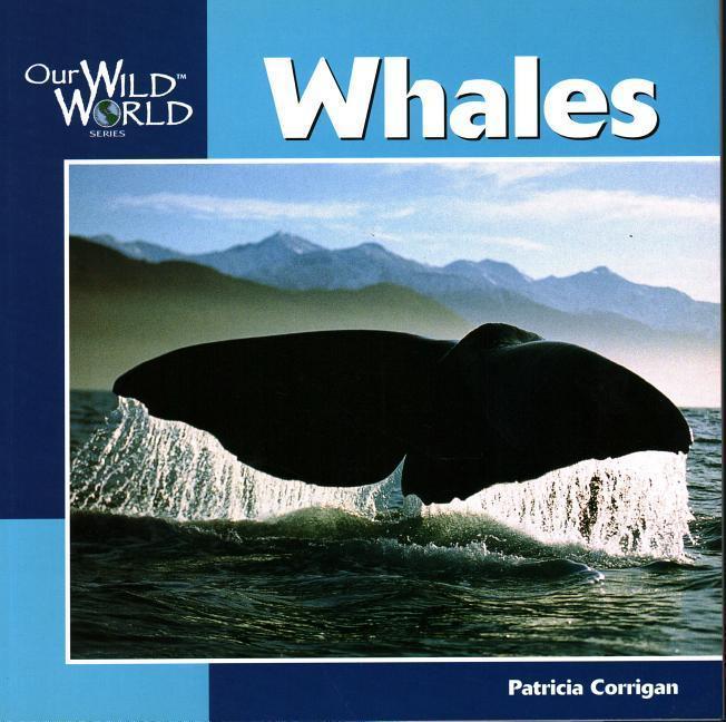 Whales als Taschenbuch