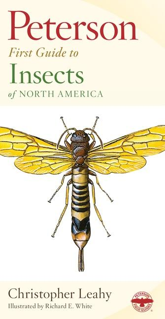 Peterson First Guide to Insects als Taschenbuch