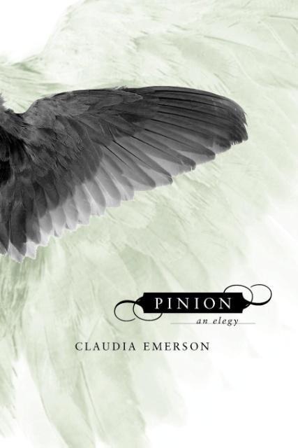Pinion als Taschenbuch
