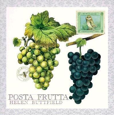 Posta Frutta - Postcard Book als Buch