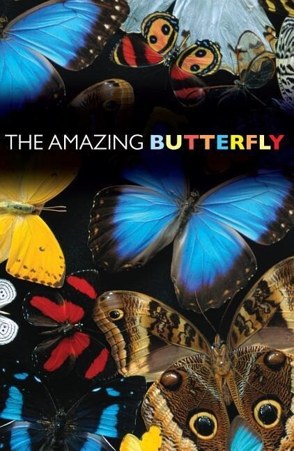 Amazing Butterfly: 25-Pack Tracts als Taschenbuch