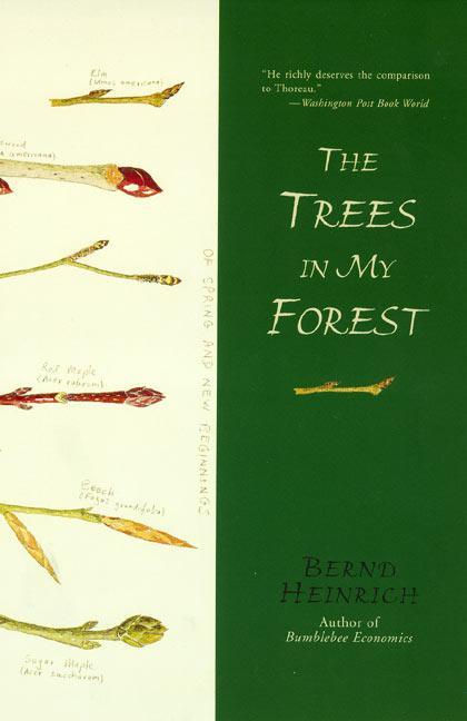 The Trees in My Forest als Taschenbuch