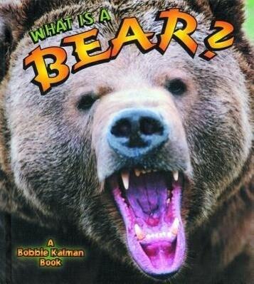 What Is a Bear? als Buch