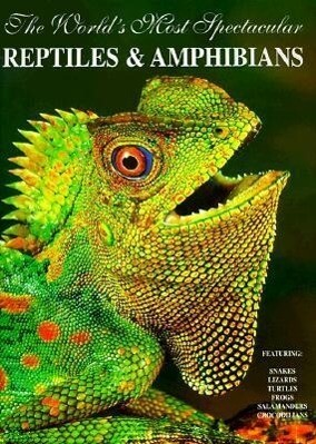 The World's Most Spectacular Reptiles and Amphinas als Taschenbuch
