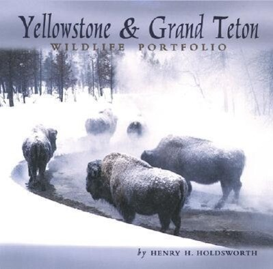 Yellowstone & Grand Teton Wildlife als Buch
