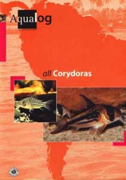 All Corydoras als Buch