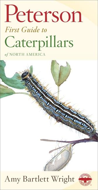 Peterson First Guide to Caterpillars of North America als Taschenbuch