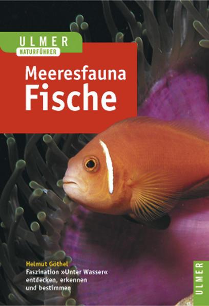 Meeresfauna. Fische als Buch