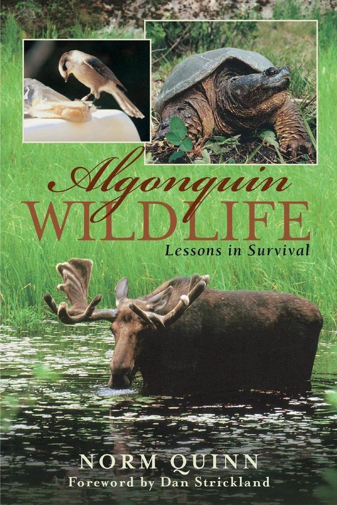 Algonquin Wildlife als eBook von Norm Quinn