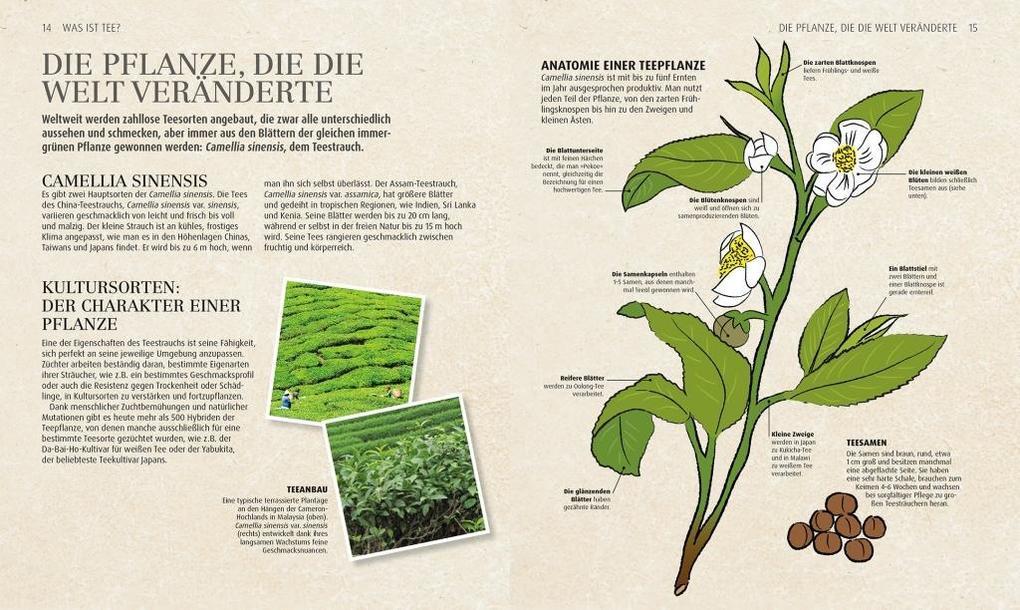 Ziemlich Arbeitsblatt Auf Die Reproduktion Bei Pflanzen Fotos ...