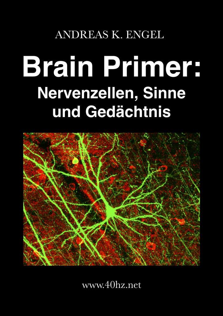 Brain Primer: Nervenzellen, Sinne und Gedächtnis als eBook