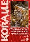 Florida-Zwergseepferdchen im Meerwasseraquarium