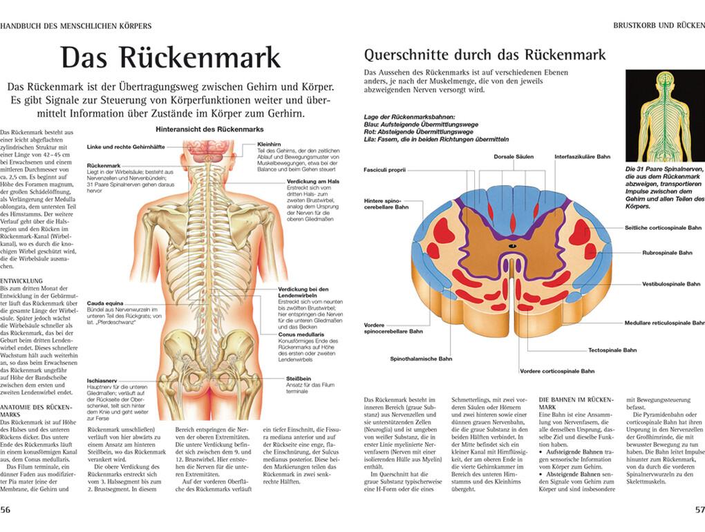 Handbuch des Menschlichen Körpers (Buch), Peter Abrahams