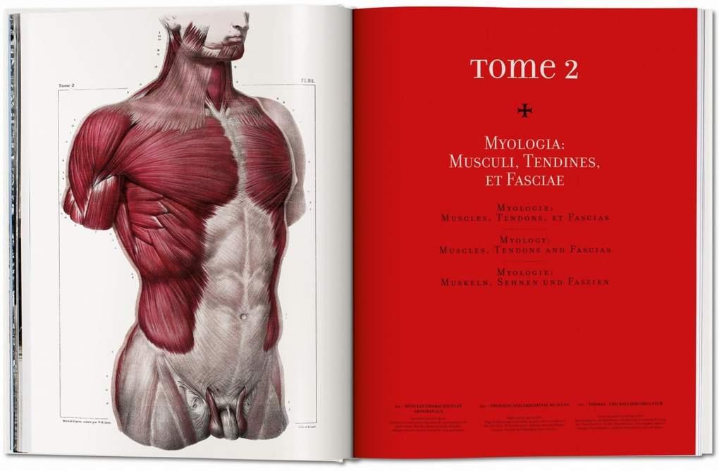 Ungewöhnlich Grundlagen Der Menschlichen Anatomie Und Physiologie ...