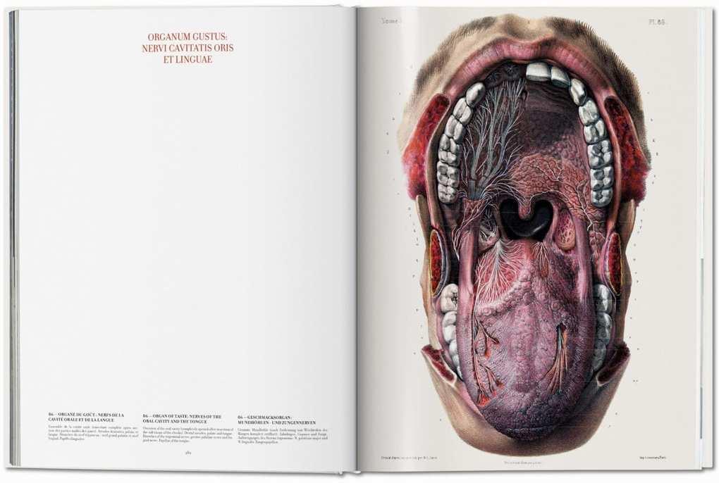 Nett Netter Atlas Der Menschlichen Anatomie Online Galerie ...