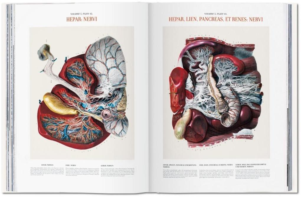 Bourgery. Atlas of Human Anatomy and Surgery (Buch), Jean-Marie Le ...