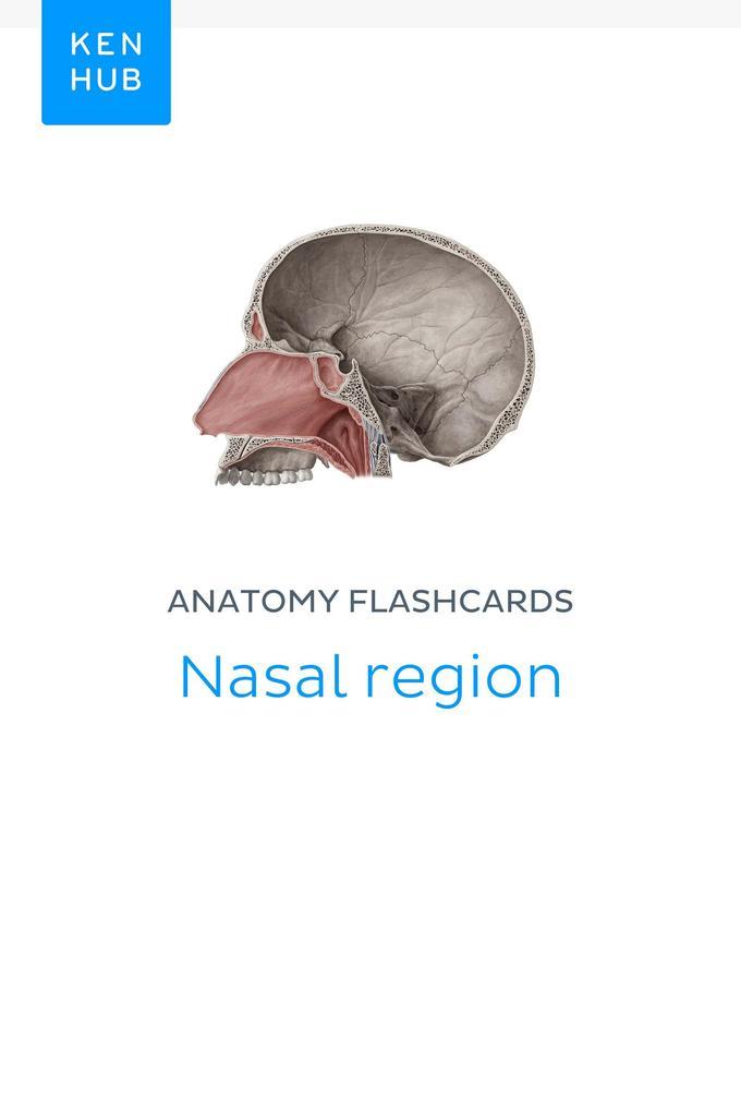 Anatomy flashcards: Nasal region als eBook von