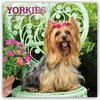 Yorkshire Terriers 2019 Square Foil