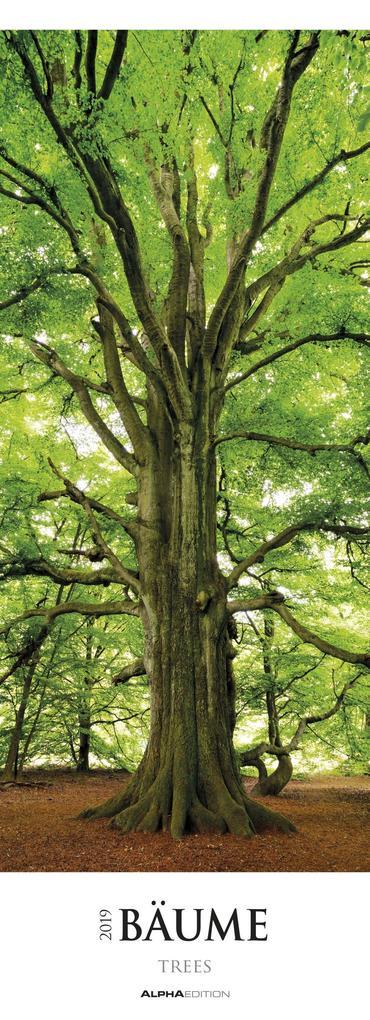 Bäume 2019 Streifenkalender XXL als Kalender