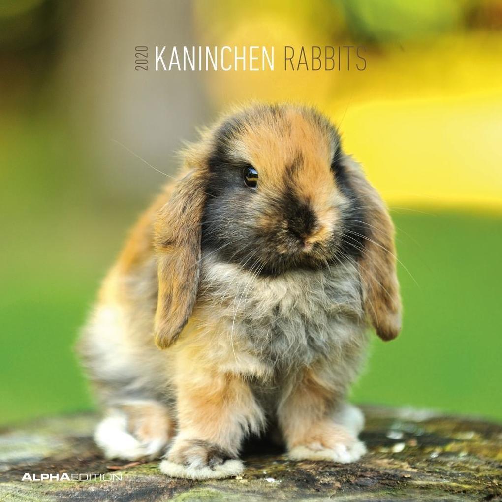 Kaninchen 2020 Broschürenkalender als Kalender