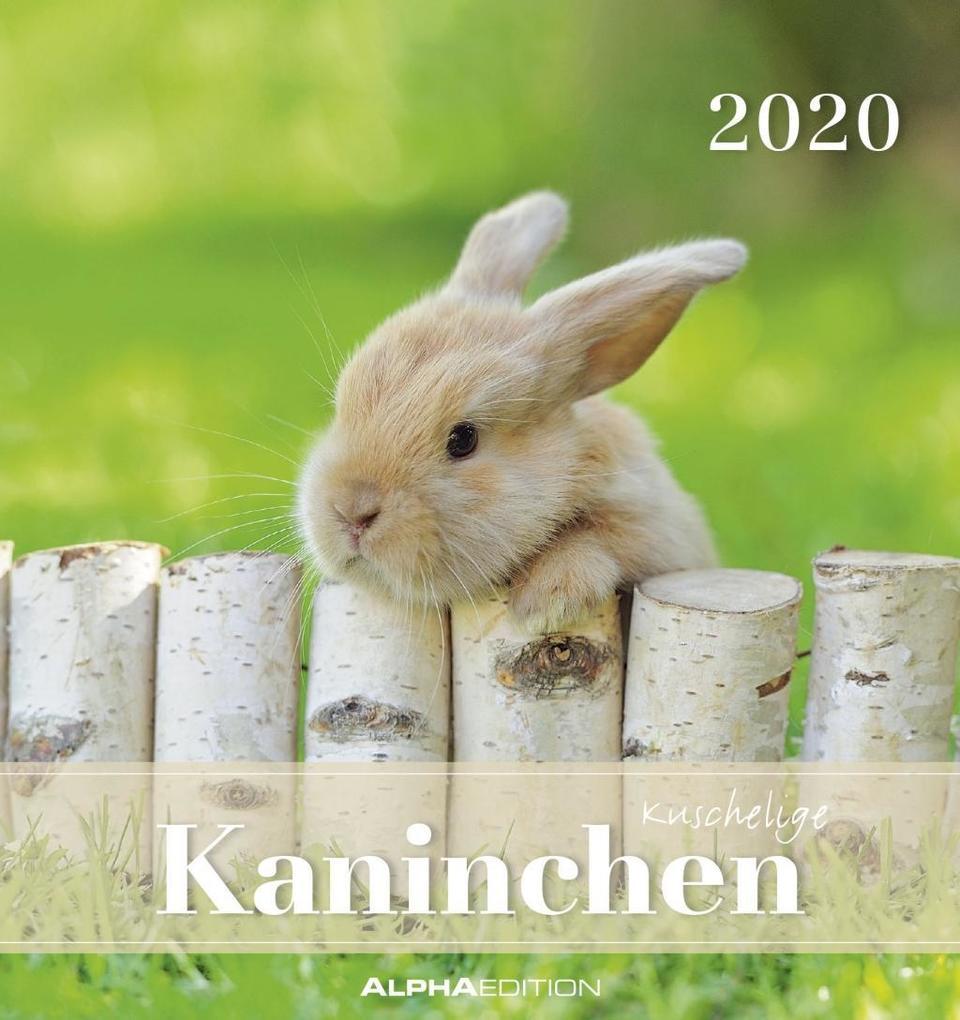 Kaninchen 2020 - Postkartenkalender (16 x 17) - Rabbits - zum Aufstellen oder Aufhängen - Geschenkidee - Tierkalender - Gadget als Kalender