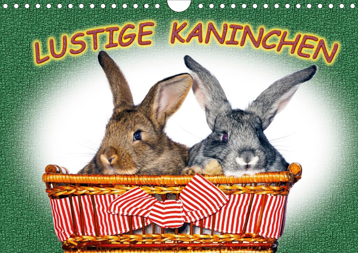 Lustige Kaninchen (Wandkalender 2020 DIN A4 quer)